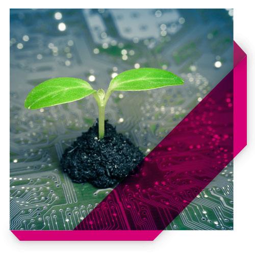 Green e sostenibilità